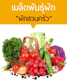 เมล็ดพันธุ์ผักสวนครัว เทพซีดส์ดอทคอม ศูนย์รวมเมล็ดพันธุ์ระดับเทพ โทร 062-149-9644 Line Id @Lnwseedstore อีเมล maledpaksong@gmail.com