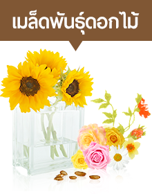 เมล็ดพันธุ์ดอกไม้ เทพซีดส์ดอทคอม ศูนย์รวมเมล็ดพันธุ์ระดับเทพ โทร 062-149-9644 Line Id @Lnwseedstore อีเมล maledpaksong@gmail.com