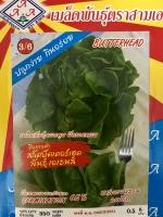 เมล็ดผักสลัด บัตเตอร์เฮด 3a